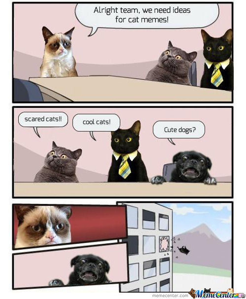 Cats Product Improvement Meeting