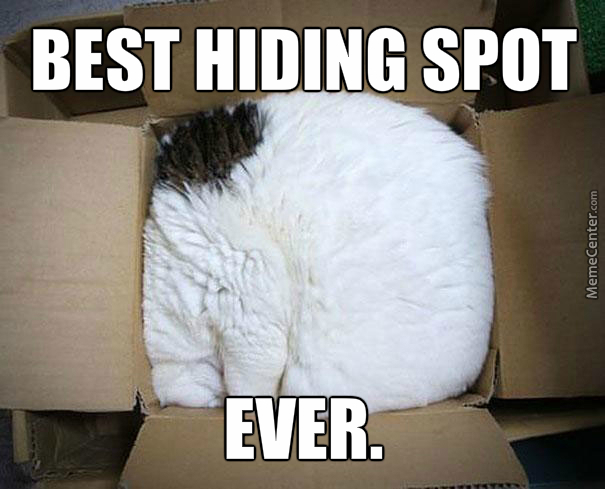 Cats W/ Hide And Seek