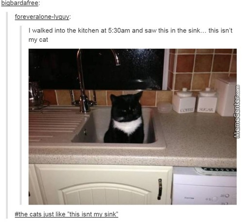 Cats Will Be Cats.