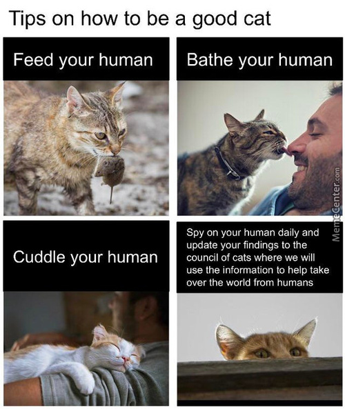 Cats Will Rule The World