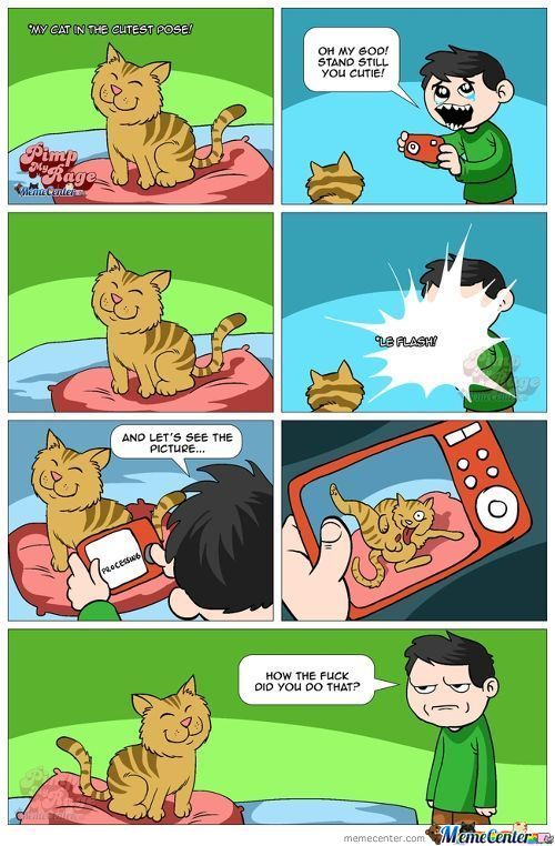 Cats Work In Mysterious Ways