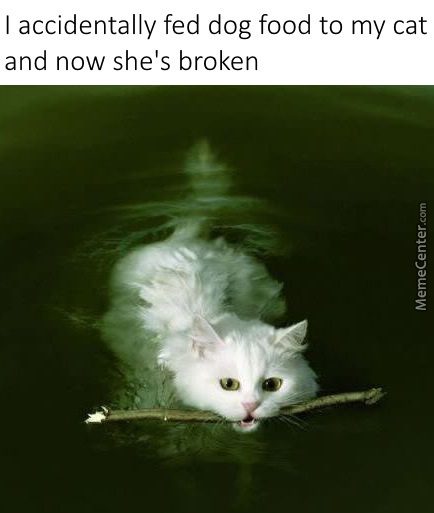 Catto Was Never The Same Again