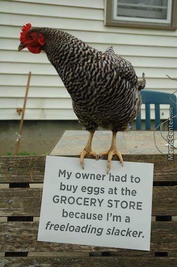 Chickens Should Just Get Jobs!