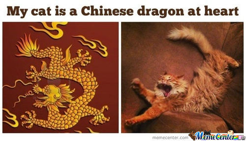 Chinese Cat Dragon, Your Argument Is Invalid!