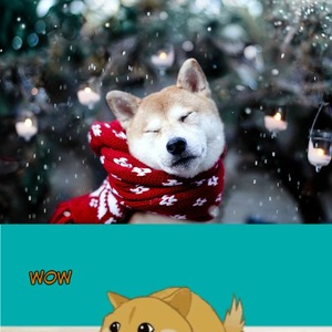 christmas doge by ifreet meme center - Christmas Doge