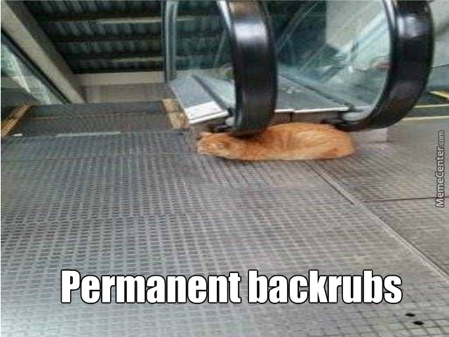 Clever Cat Is Clever