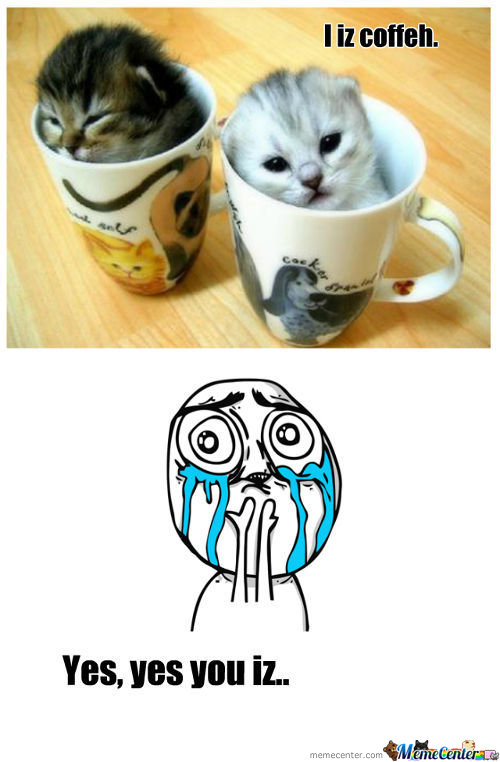 Coffee Kittens