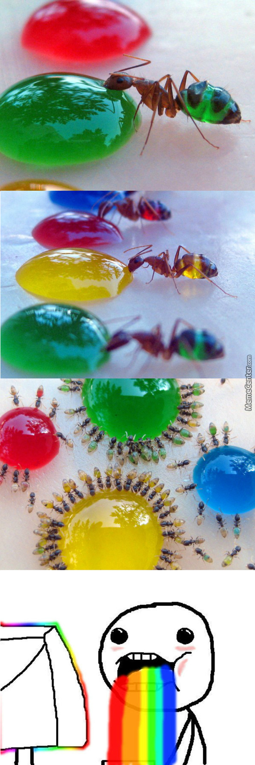 Color Ant