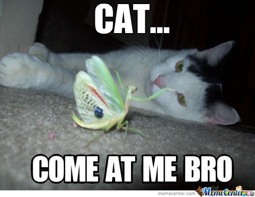 Come At Me Bro!!! Lvl. Cat