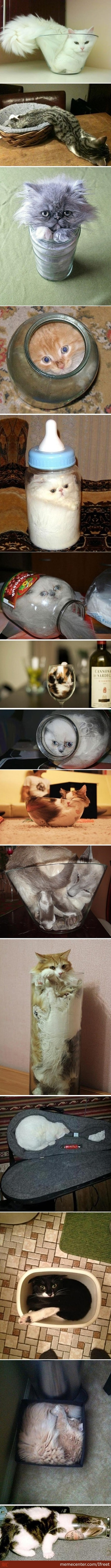 Compilation Of Liquid Cats :3