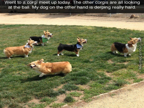 Corgis Are The Best Doggos