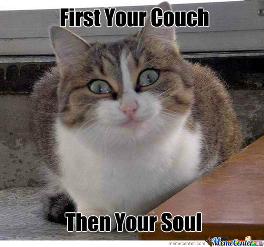 Surprise Cat Meme