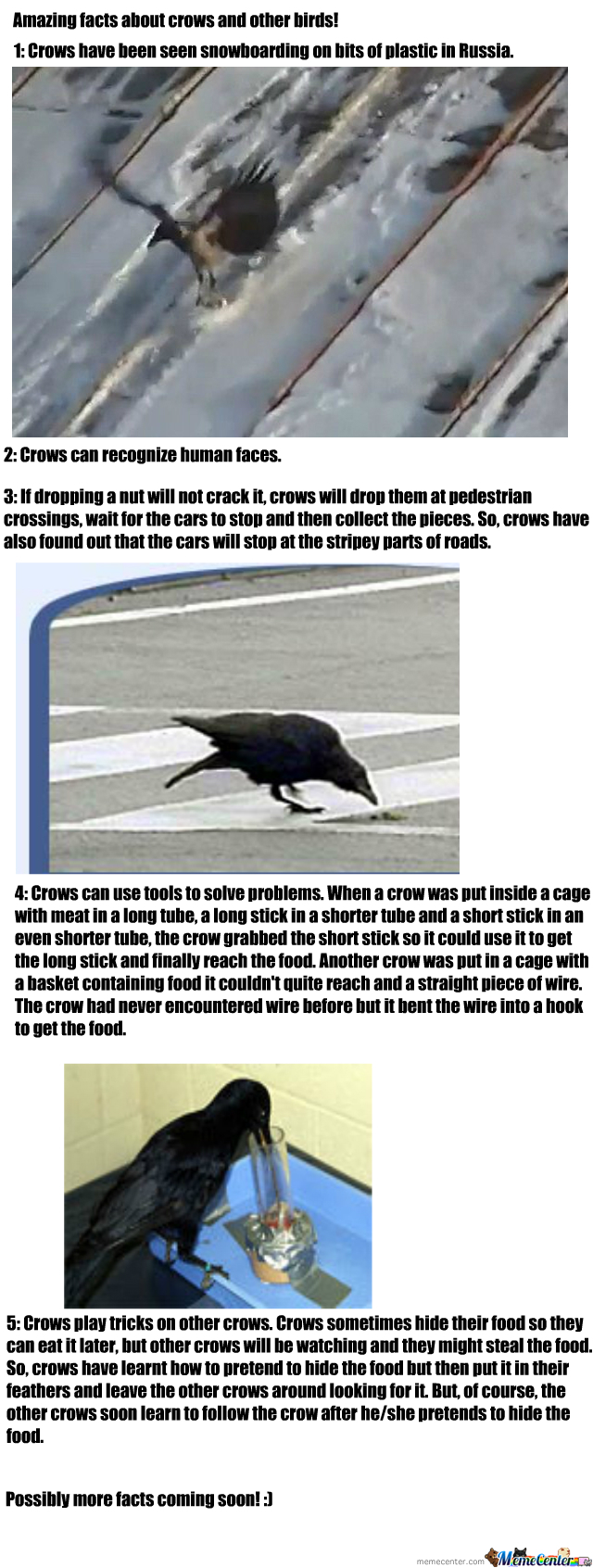 Crows&crows;&crows;.....
