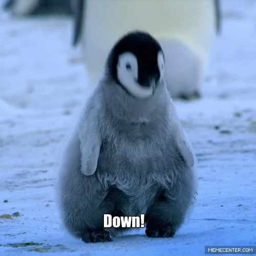 cute penguin working out_gp_1491487 cute penguin working out by whocaresaboutmyname meme center,Cute Penguin Meme