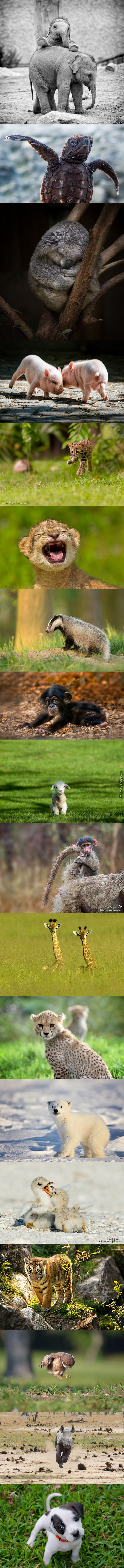 Cutest Baby Animals In The Wild! (Except Last One)