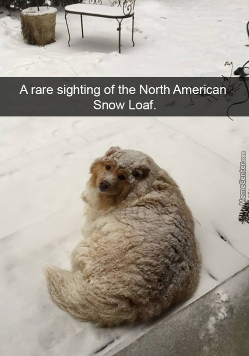 Daily Dose Of Winter Awww