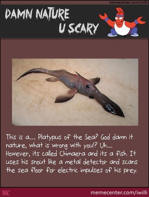 Damn Nature, U Scary: The Platypus Of The Sea