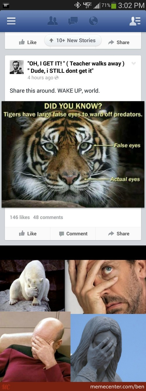 Did You Know Tigers Have False Eyes