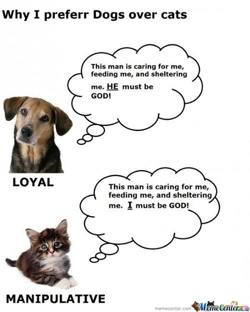 Difference Between Cats And Dogs.