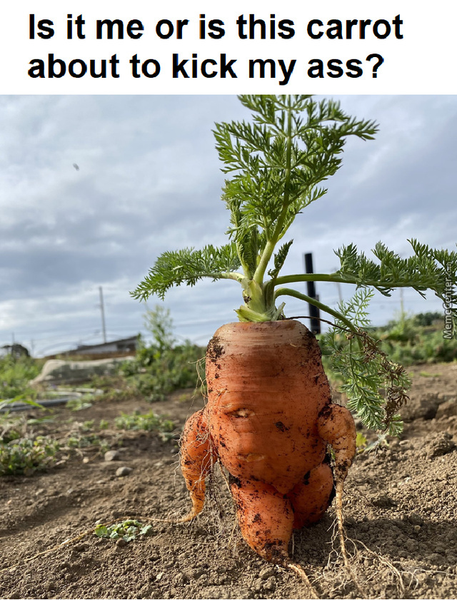 Dio Carrot: Oh, You'Re Approaching Me?
