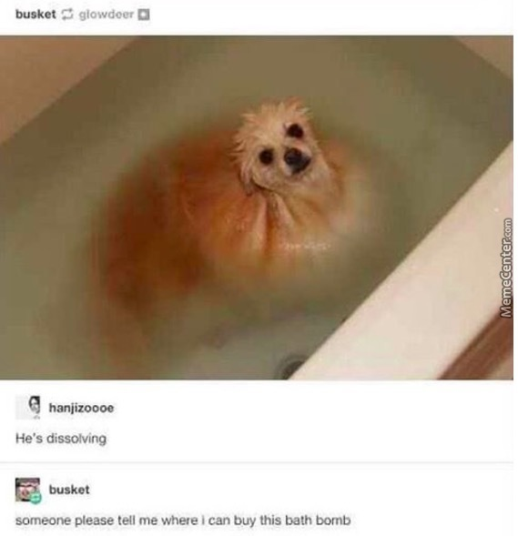 dog bath bomb for the win_o_7076339 dog bath bomb for the win by strangepotatoes meme center