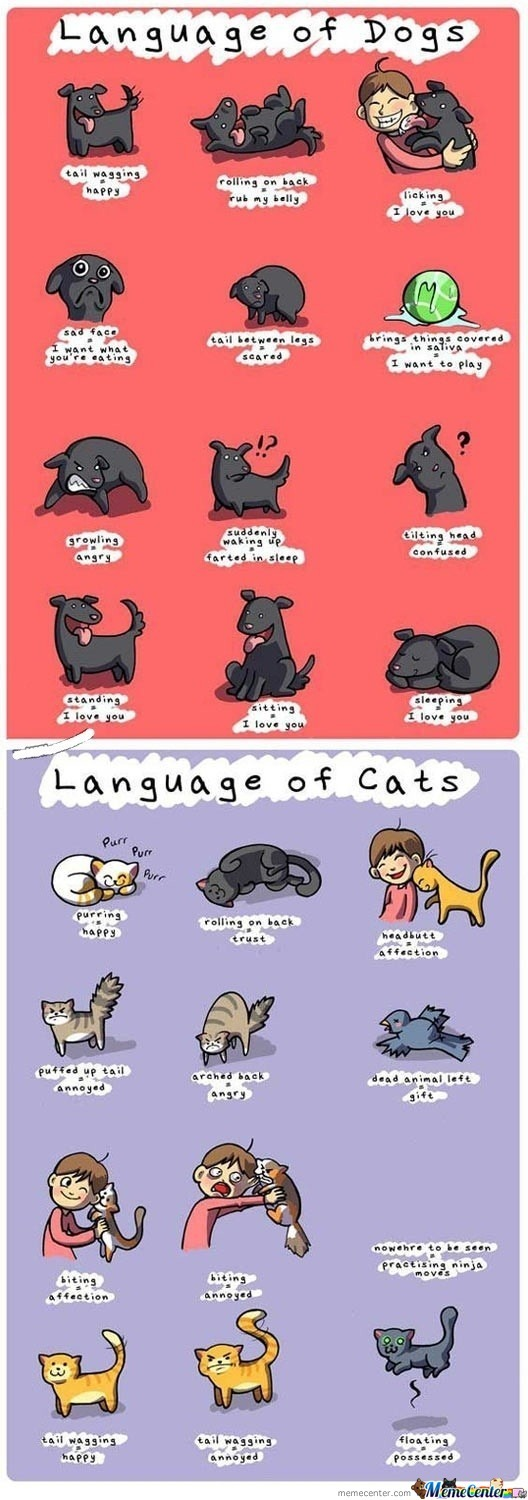 Dog-Cat Language