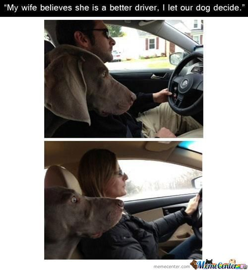 Dog In Car While Women Drive