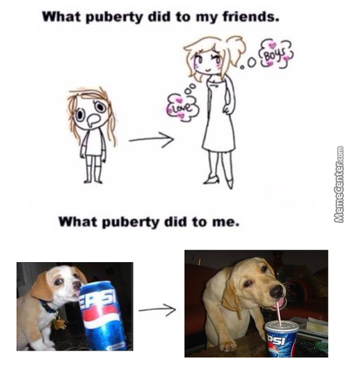 Dog Sipping On Beverage Memes
