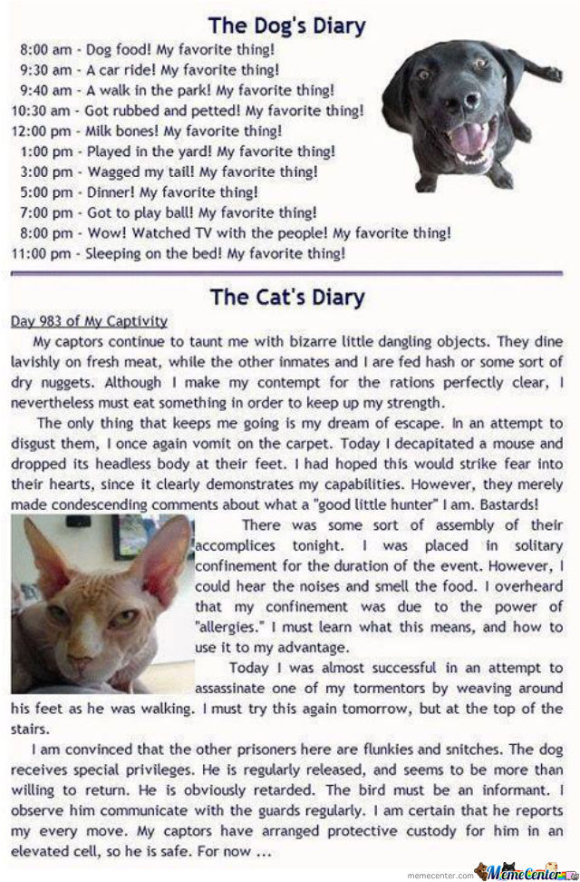 The Difference Between Dogs And Cats Diary