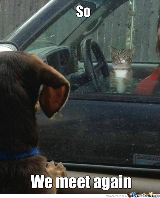 Cats In Cars Versus Dog In Cars