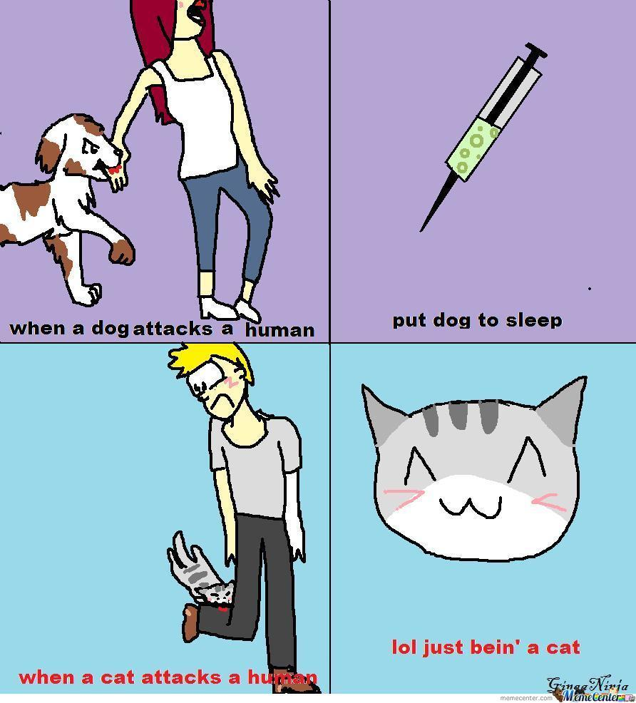 Dog Vs Cat By Ginganinja Meme Center