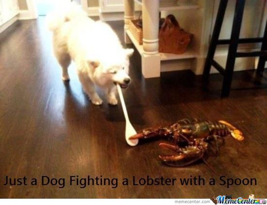 Dog Vs. Lobster