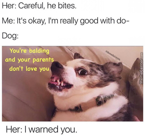 Doggo Hurt My Feelings
