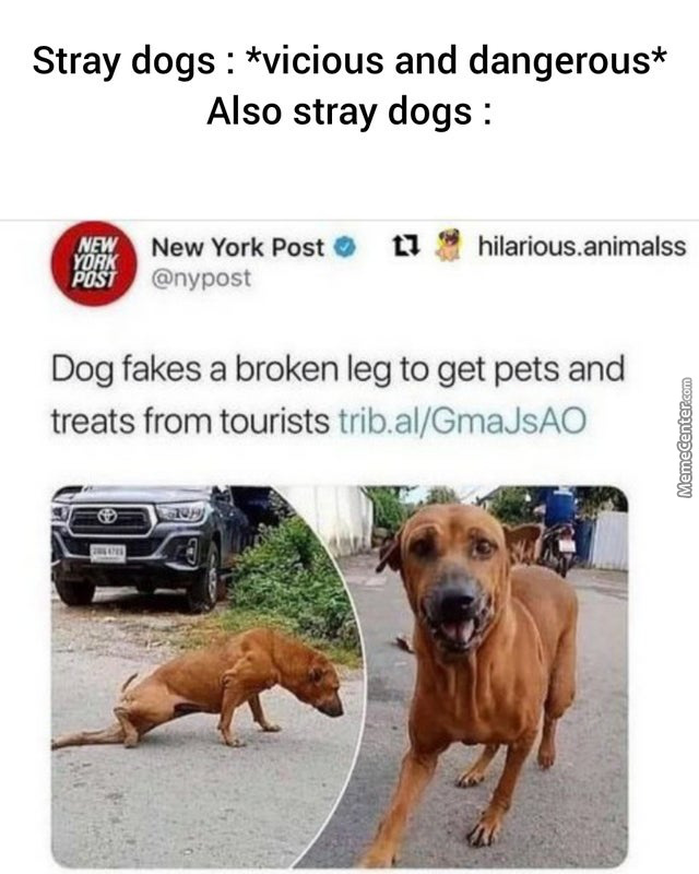 Dogs Are Dogs