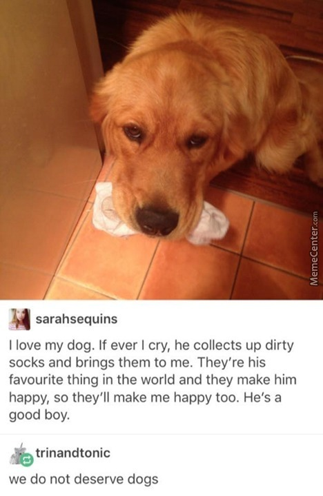 Dogs Are Gods