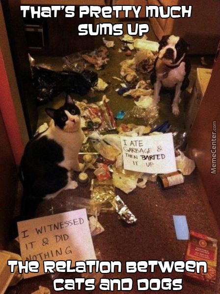 Dogs Are Messy,cats Are Evil.that's It