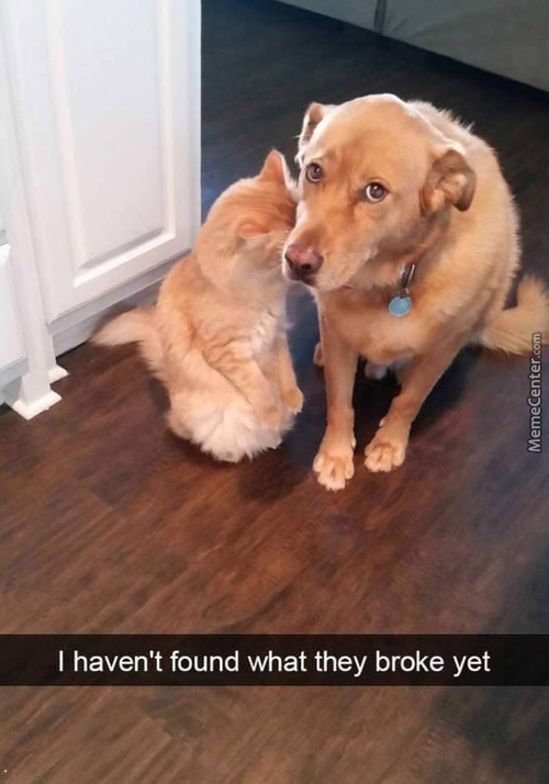 Dogs Are So Cute For Things Like This