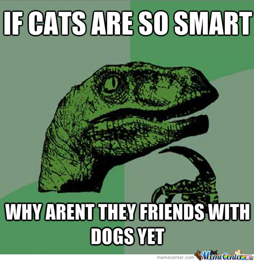 Dogs/cats