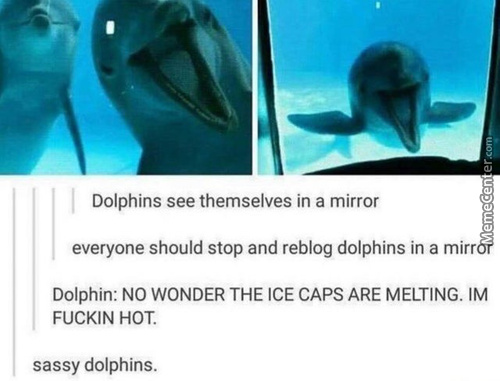 Dolphins Rule