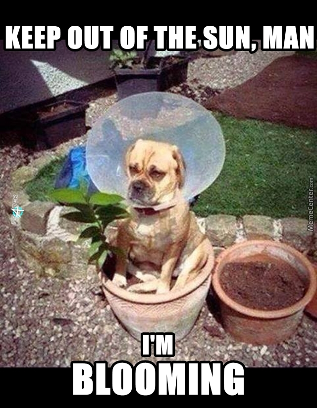 Don't Forget To Water The Dog