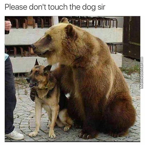 Don'T Touch The Bork Pls