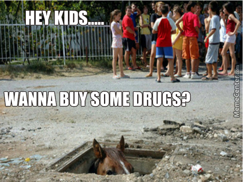 Don't Trust Horses, They're All Secret Drug Dealers And Are A Menace To Our Society...
