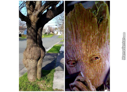 Douchebag Groot