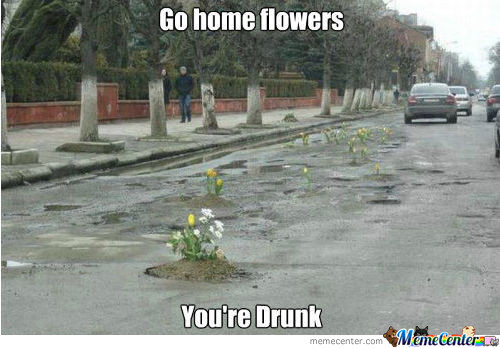 Drunk Flowers In Bologna