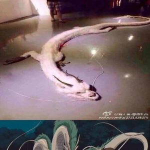 Real life chinese dragon discovered