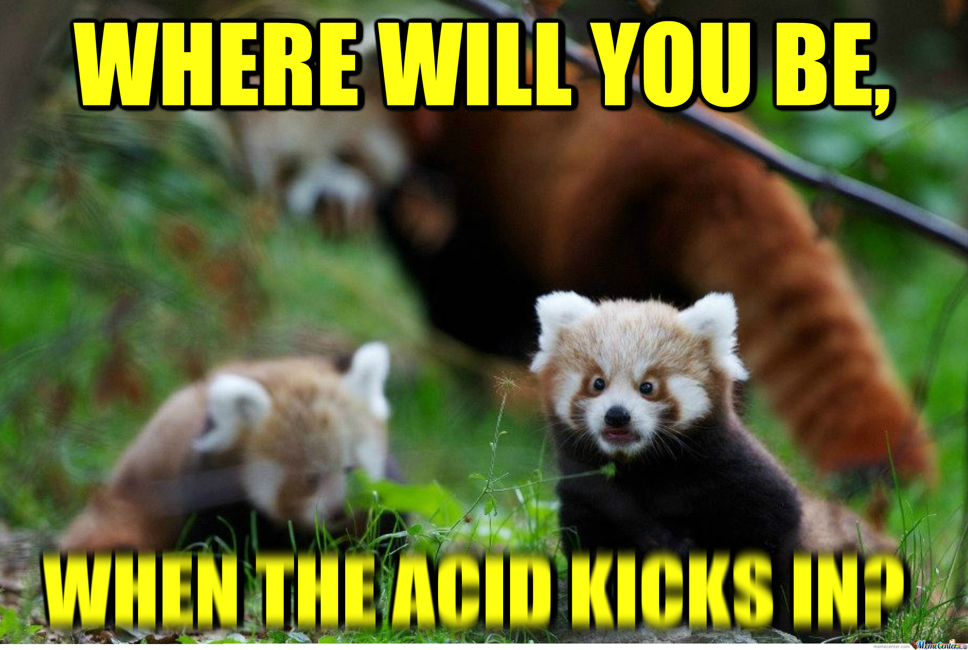 Dude like red pandas by recyclebin meme center dude like red pandas voltagebd Image collections