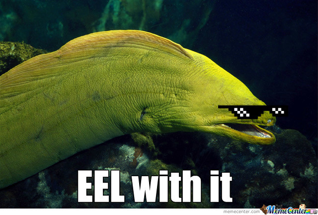 Eel With It