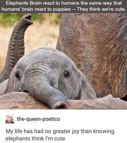 Elephants Are Just Huge Puppers