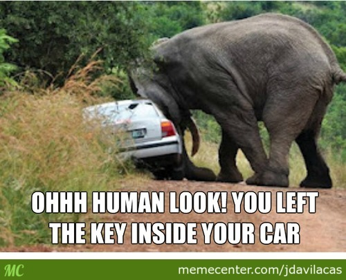 Elephants Can Be Helpful To Find The Keys