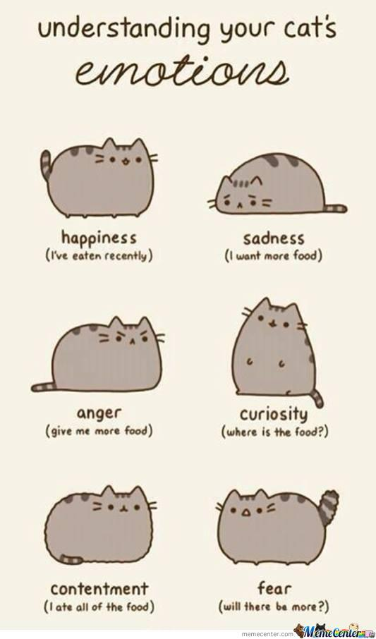 Emoticons (For Cats)